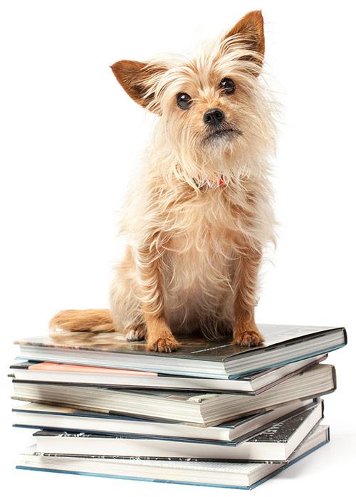 Hundeschule hundequerdenker