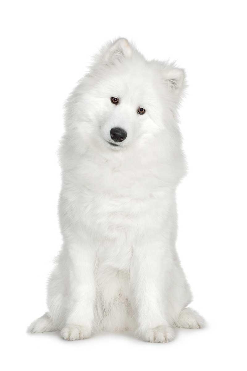 Hundefuehrerschein-und-Sachkunde