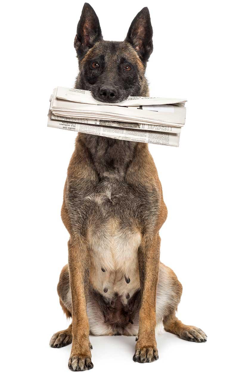 Lesenswertes-Hunde-haben-auch-Rechte