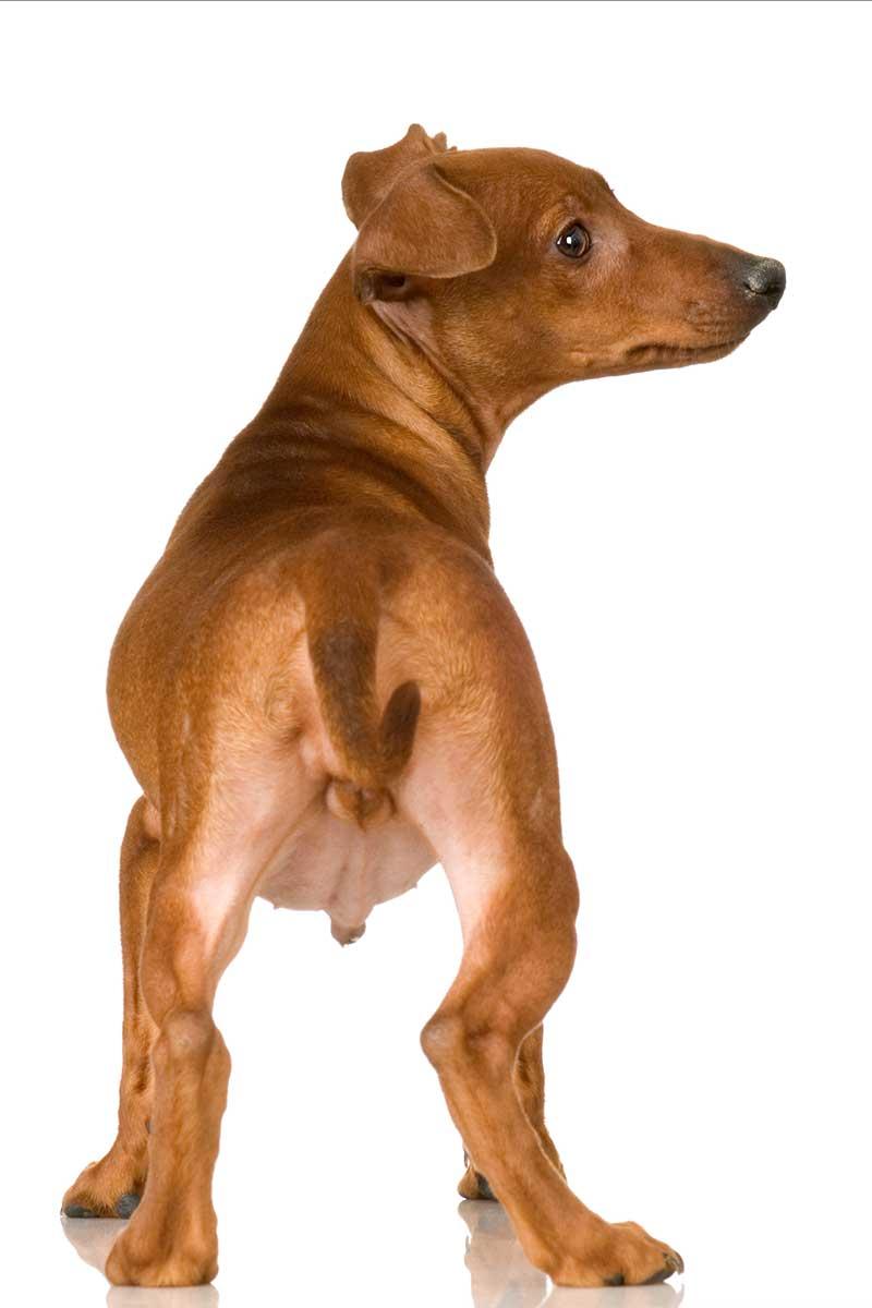 Hundefuehrerschein